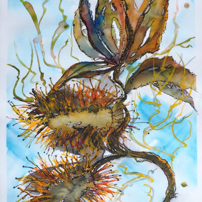 In Support of the Bush Fire Relief Auction  – Watercolour – Coastal Banksia – Artist Wyn Vogel