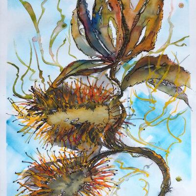 Watercolour – Coastal Banksia – Artist Wyn Vogel