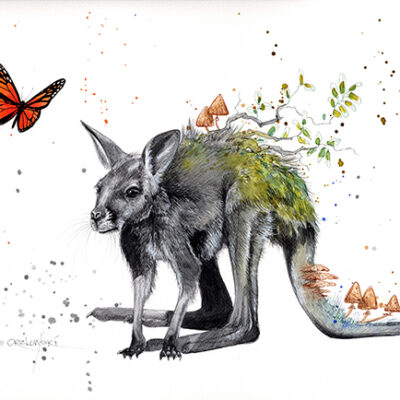 49 Limited Edition Giclee Print – numbered and signed by the Artist – Lynette Orzlowski – From The Ashes – Kangaroo available to buy now