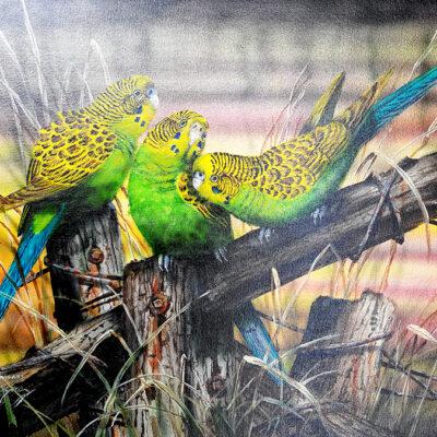 11. Budgerigars – Artist Paul Margocsy – Canvas