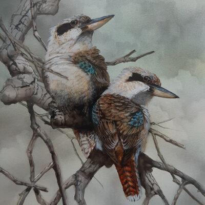19. Laughing Kookaburras – Artist Paul Margocsy – Framed Glass on Board