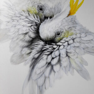 1. Sulphur Crested Cockatoos – Artist Paul Margocsy – Canvas