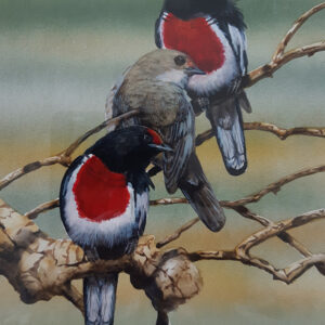 26. Red Capped Robins – Artist Paul Margocsy – Framed Glass on Board
