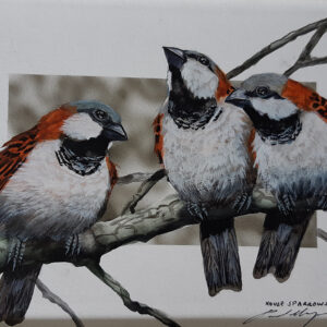 28. House Sparrows – Artist Paul Margocsy – Framed on Board