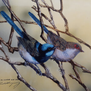 30. Superb Blue Wrens – Artist Paul Margocsy – Framed Glass on Board