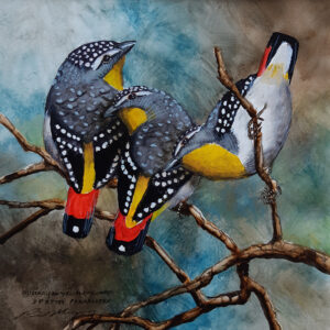 32. Spotted Pardelotes – Artist Paul Margocsy – Framed on Board