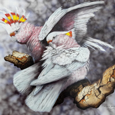 5. Major Mitchell's Cockatoos – Artist Paul Margocsy – Canvas