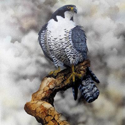 5. Peregrine Falcon – Artist Paul Margocsy – Canvas
