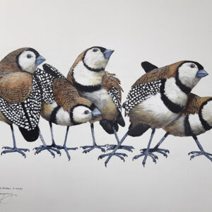 9. Double Barred Finches – Artist Paul Margocsy – Canvas