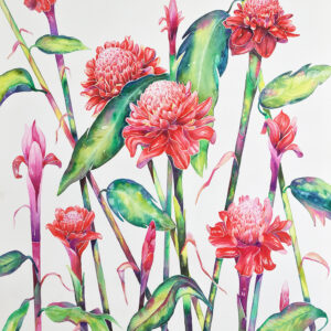 Red Torch Ginger – Artist Ferie Sadeghi – Watercolour on Canvas