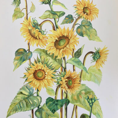 Sunflowers – Artist Ferie Sadeghi – Watercolour on Canvas