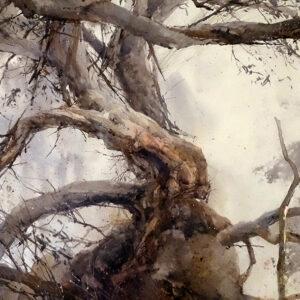 30. Snow Gum – Mt Torbreck Victoria – Artist Julian Bruere – Watercolour